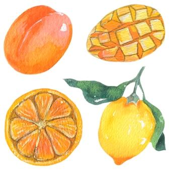 Pfirsich, mango, orange und zitrone. aquarell früchte abbildung. vektor isolierte elemente.