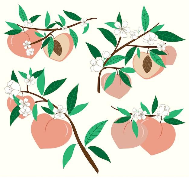 Pfirsich mit blumen gesetzt. frische sommerstimmung