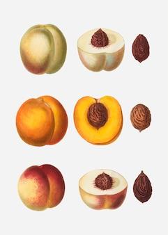 Pfirsiche in einer reihe
