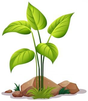 Pflanze auf weiß