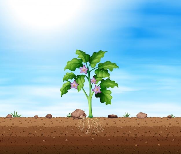 Pflanze mit lila blume
