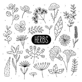 Pflanzen doodle illustrationen, cliparts, reihe von elementen. kräuter, blumen. natürlicher inhaltsstoff, biologische, vegane kosmetik. aufkleber, ikone, hand gezeichnete illustration.