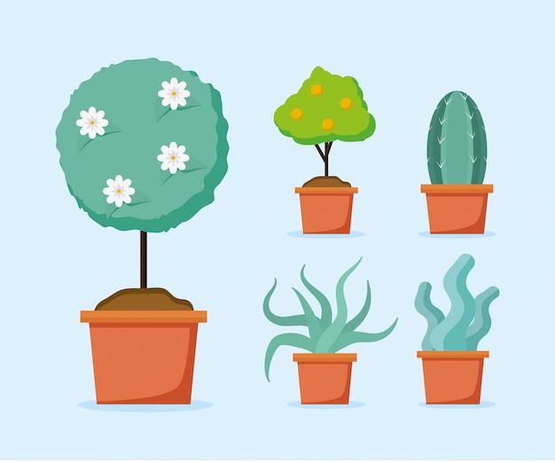 Pflanzen in töpfen
