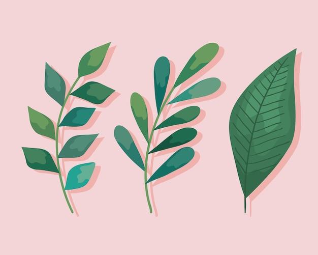 Pflanzenblätter eingestellt