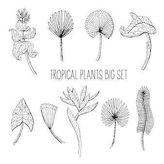 Pflanzenblätter und blumen kritzeln illustration. tropische, exotische pflanzen. aufkleber, symbol, dekoration.