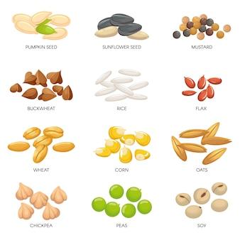 Pflanzensamen. getreidekörner, kichererbsen nüsse und zellulose getreide. nuss und samen lokalisierten karikaturillustration
