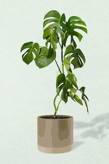 Pflanzenvektorkunst, monstera-illustration