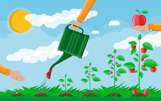 Pflanzenwachstum vom spross bis zur frucht.
