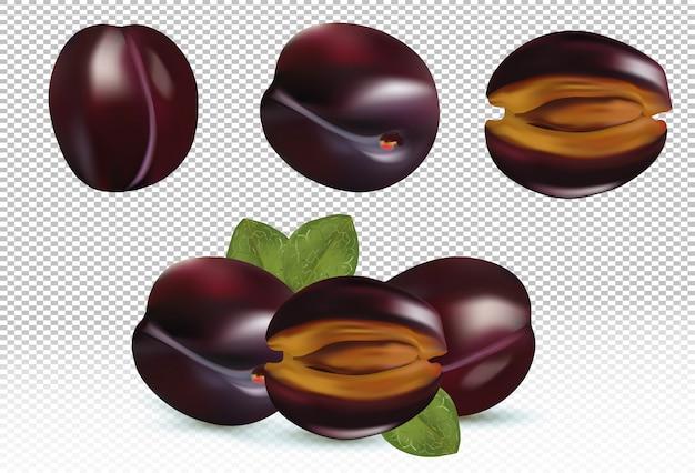 Pflaumensatz mit blättern. pflaumenfrüchte sind ganz und halbiert.