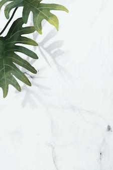Philodendron radiatum blattmuster auf weißem marmorhintergrundvektor