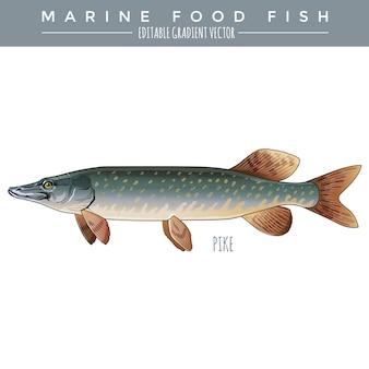 Pike. lebensmittel fisch vektor