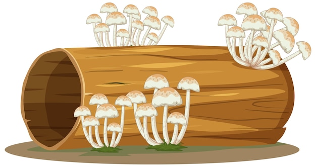Pilz auf baumstamm lokalisiert auf weiß