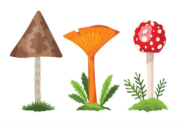 Pilz und giftpilz. illustration der verschiedenen arten von pilzen auf weiß
