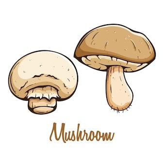 Pilzgemüse in farbiger hand gezeichnet mit text auf weißem hintergrund