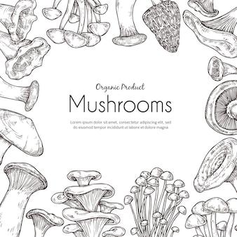 Pilzrahmen. vegetarisches essen, skizzieren sie herbstliche waldpflanzen. retro gesunde rohe, kochende zutaten champignon-trüffel-vektor-hintergrund. herbstskizze vegetarische und organische pilzillustration