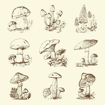 Pilzset handgezeichnet graviert. vintage bio vegetarisches essen. champignon, pfifferlinge, honigpilz, fliegenpilz, amanita, gewöhnliches stinkhorn, penny bun, schorfstiel mit roter kappe für menü, verpackung