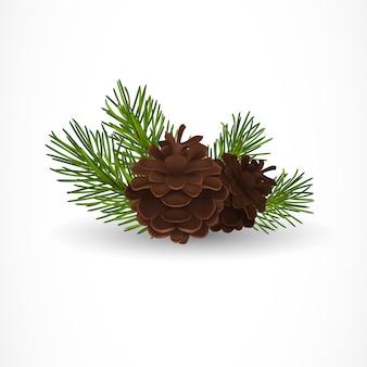 Pine tree cones und zweige