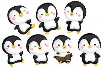 Pinguin-Image-Set