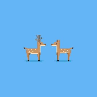 Pixel niedlichen männlichen und weiblichen hirsch.