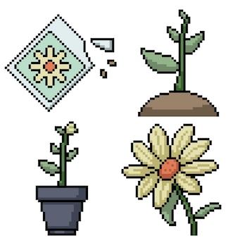 Pixelkunst von blumenpflanzensamen
