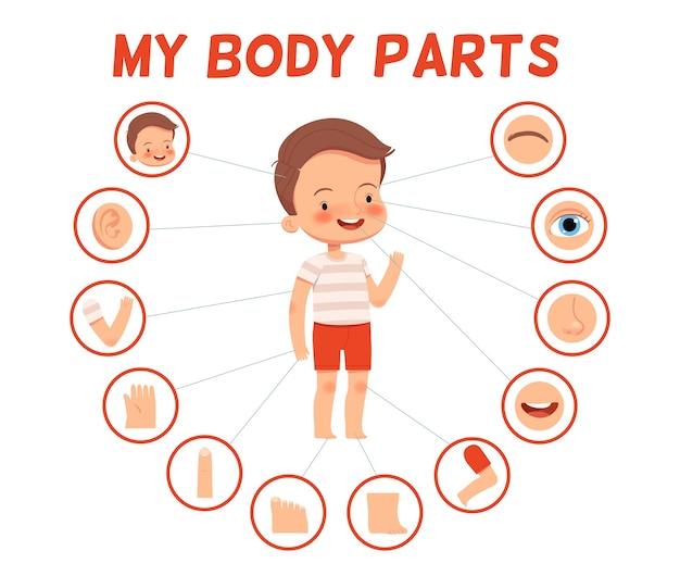 Plakat für kinder lernen. fröhlicher junge und seine körperteile in separaten bildern.