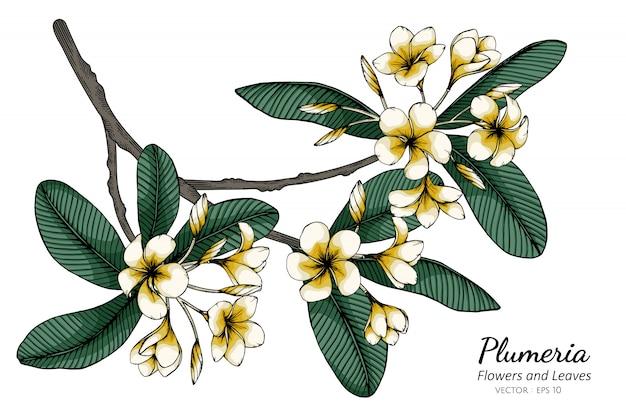 Plumeria blumen- und blattzeichnungsillustration mit strichzeichnungen auf weißem hintergrund.