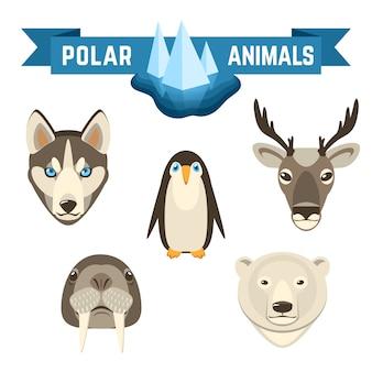 Polare tiere eingestellt