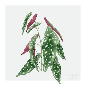 Polkadot-begonienblatt lokalisiert auf weißem hintergrund