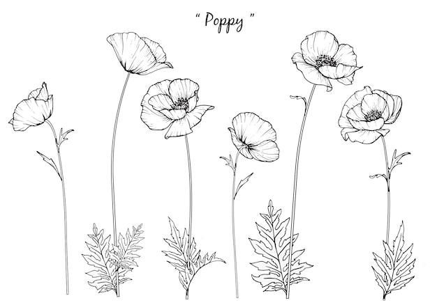 Poppy leaf und blumenzeichnungen.