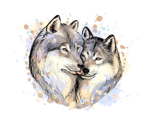 Porträt der wölfe von einem spritzer aquarell, handgezeichnete skizze. illustration von farben