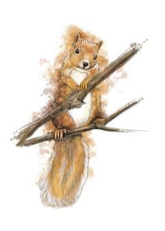Porträt einer eichhörnchenhand gezeichneten skizze mit spritzer der aquarellillustration