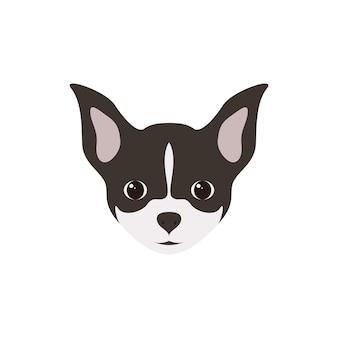Porträt von chihuahua-welpen-einfacher hund