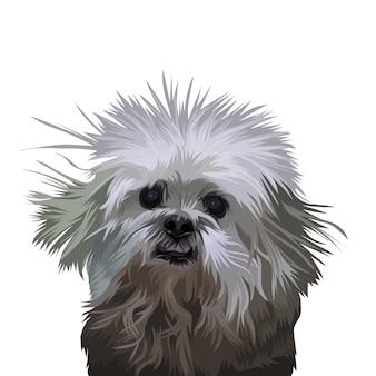 Portrait tierhund
