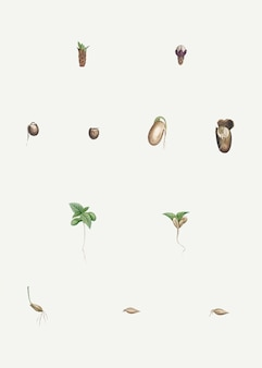 Präparierte pflanzen