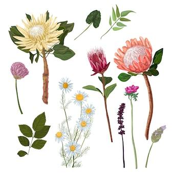 Protea und andere blumen
