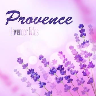 Provence lavendel feld hintergrund