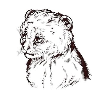 Puma baby, porträt der isolierten skizze des exotischen tieres. hand gezeichnete illustration.