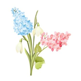 Purpurrote lila blumen von syringa und von weißem galanthus.