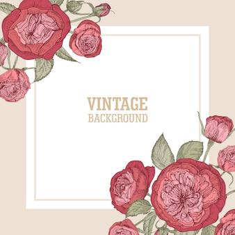 Quadratische kartenschablone mit zarten blühenden englischen rosen