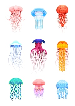 Quallen setzen, schöne meerestiere der verschiedenen farben illustrationen auf einem weißen hintergrund