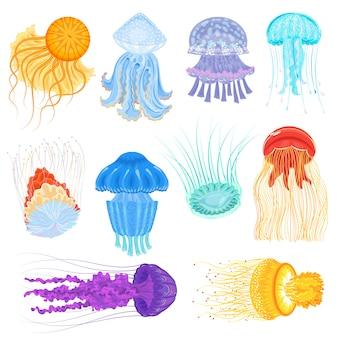 Quallenvektor-ozeanquallen- und unterwasser-brennnesselfisch-illustrationssatz der quallenartigen leuchtenden medusa im meer