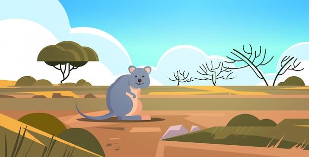 Quokka genießen die sonne in australien wüste australische wildtier tierwelt fauna konzept landschaft horizontal