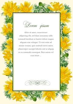 Rahmen mit den blüten von adonis vernalis