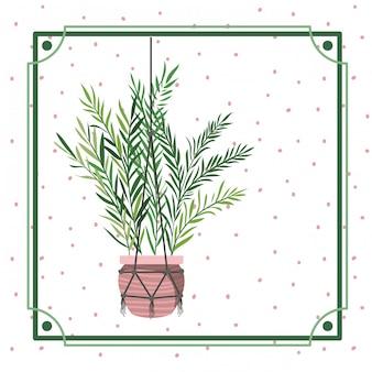 Rahmen mit zimmerpflanze auf makramee-kleiderbügeln