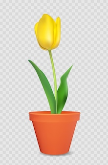 Realistische 3d-tulpe im blumentopf. gestaltungselement.