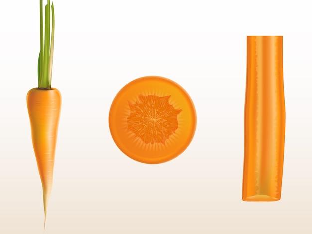 Realistische abbildung der orange karotte, der ganzen und geschnittenen stücke lokalisiert auf hintergrund.