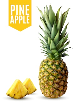 Realistische ananas-illustration