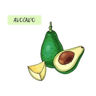 Realistische avocado. sommerliches tropisches essen für gesunden lebensstil. karikatur ganze frucht und hälfte. hand gezeichnete illustration. natürliches bio-gemüse. skizze auf weißem hintergrund.