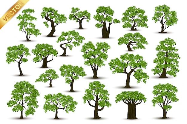 Realistische bäume der ansammlung getrennt auf weißem hintergrund
