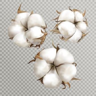 Realistische baumwollblumen reifen geöffneten bollensamen